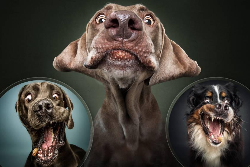 hunde-jpg5e788d52300ee